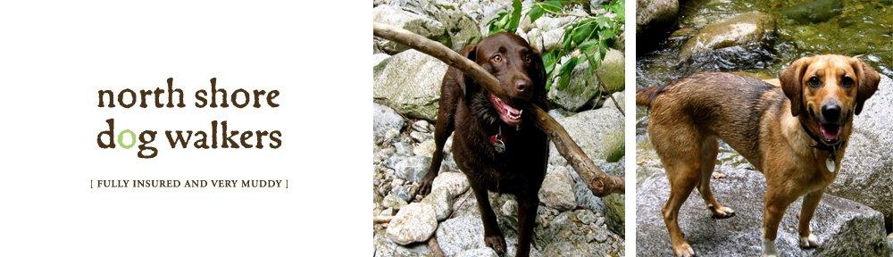 Best Dog Walkers Vancouver